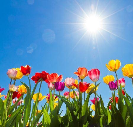 DBAMY O ZIEMIĘ – 3. Liczymy kwiaty