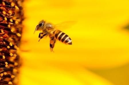 20 maj - Światowy Dzień Pszczół